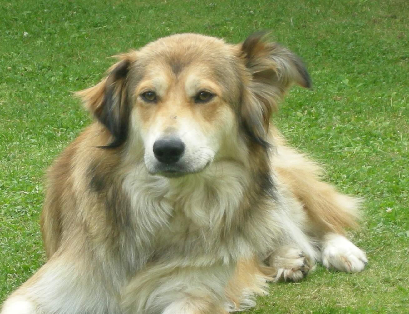 Hund: Ninetta